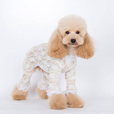 Dog Love Me Lace Onesie | Small to Medium Dog Fashion Clothing | BowWow shop Online