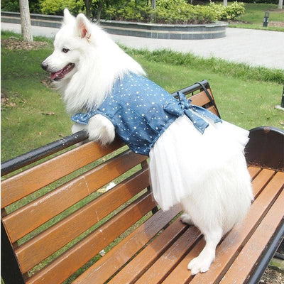 Maxi Star Tutu for dogs, dog clothes, small dog clothes, dogs clothing, dog clothes female, dogs clothes boy, Dogs Clothes For Small To Medium Dog, Adorable, BowWow Shop - Top Dog Clothing Store