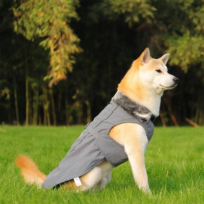 Maxi Wrap Jacket for dogs, dog clothes, dogs clothes, dog clothing, small dog clothes, dogs clothing, dog clothes female, dogs clothes boy, Dogs Clothes For Small To Medium Dog, PlayPetty, BowWow Shop - Top Dog Outfits Store