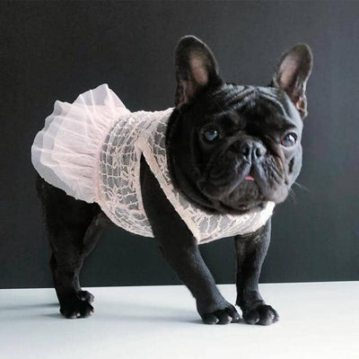 Pink Lovely Lace Dress for dogs, dog clothes, dogs clothes, dog clothing, small dog clothes, dogs clothing, dog clothes female, dogs clothes boy, Dogs Clothes For Small To Medium Dog, IPet, BowWow Shop - Top Dog Outfits Store