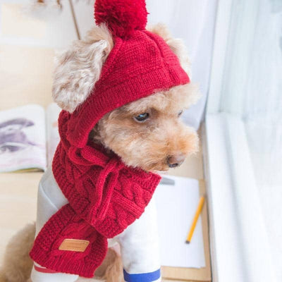 Pom-Pom Hat & Scarf for dogs, dog clothes, dogs clothes, dog clothing, small dog clothes, dogs clothing, dog clothes female, dogs clothes boy, Dogs Clothes For Small To Medium Dog, Elfie, BowWow Shop - Top Dog Outfits Store