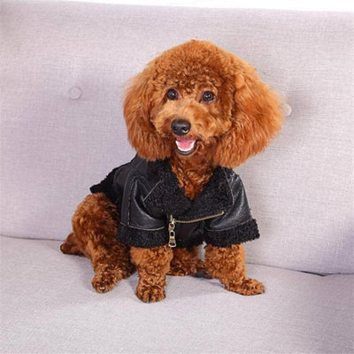 PU Leather & Fleece Coat for dogs, dog clothes, small dog clothes, dogs clothing, dog clothes female, dogs clothes boy, Dogs Clothes For Small To Medium Dog, Tailup, BowWow Shop - Top Dog Clothing Store