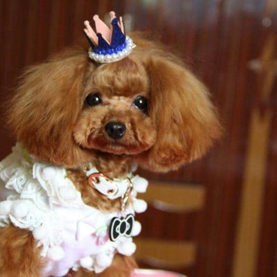 Dog Royal Crown Hair Clip | Small to Medium Dog Fashion Clothing | BowWow shop Online