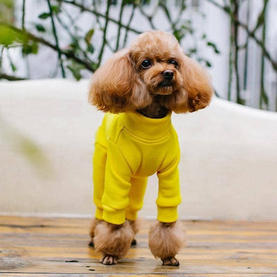 Royal Tracksuit Onesie for dogs, dog clothes, dogs clothes, dog clothing, small dog clothes, dogs clothing, dog clothes female, dogs clothes boy, Dogs Clothes For Small To Medium Dog, C-King, BowWow Shop - Top Dog Outfits Store