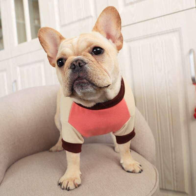 Sports Sweatshirt for dogs, dog clothes, dogs clothes, dog clothing, small dog clothes, dogs clothing, dog clothes female, dogs clothes boy, Dogs Clothes For Small To Medium Dog, PetMundo, BowWow Shop - Top Dog Outfits Store