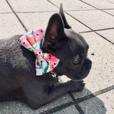 Watermelon Bow-Tie Collar & Leash Set for dogs, dog clothes, dogs clothes, dog clothing, small dog clothes, dogs clothing, dog clothes female, dogs clothes boy, Dogs Clothes For Small To Medium Dog, Free Sunday, BowWow Shop - Top Dog Outfits Store