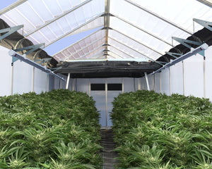 Oriana Light Deprivation Greenhouse