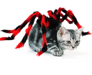 Halloween Spider Costume for Dogs and Cats