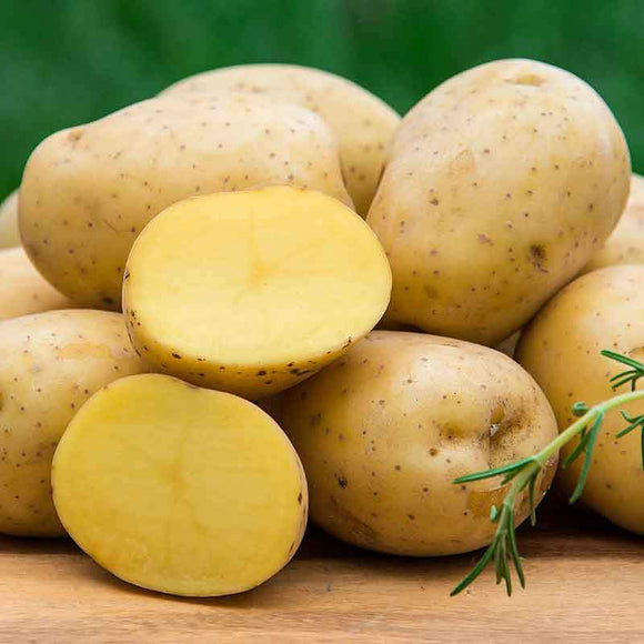 Yukon Potato - 1 lb