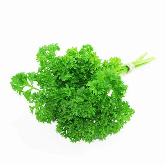 Curly Parsley / Kivircik Maydonoz