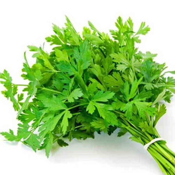 Italian Parsley / Maydonoz - 1 Bunch