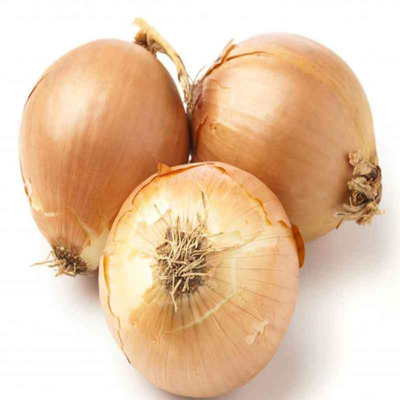 Spanish Onion / Sogan - 1lb