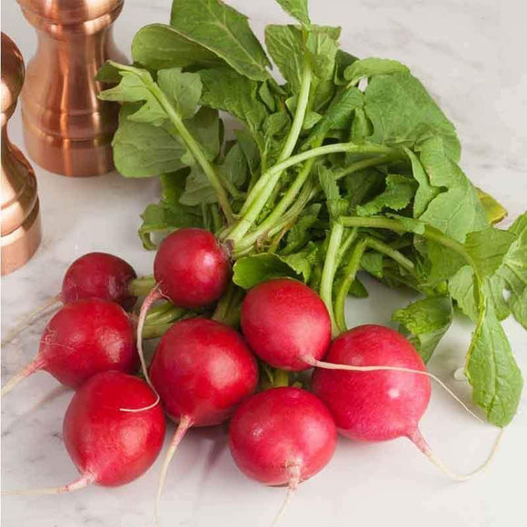 Bunch Radish / Kirmizi Turp - Turkish Food Basket