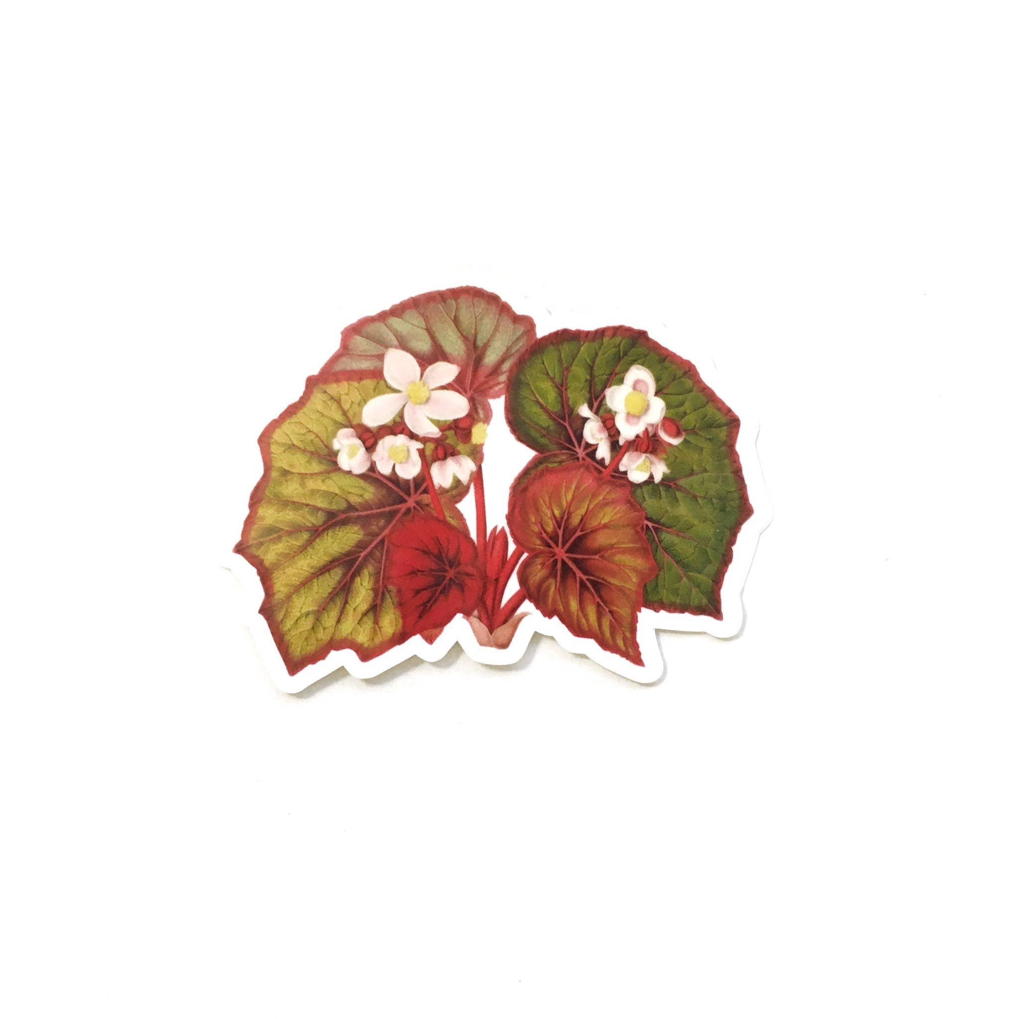 Begonia Vinyl Sticker