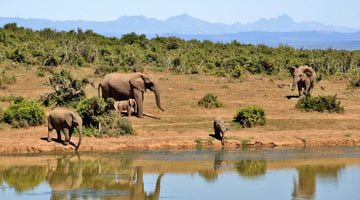 Tanzania: Hope As Elephant Killings Drop
