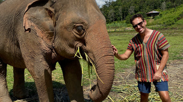 Thailand's captive elephants face starvation as tourism industry collapses