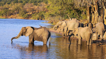 Elephant Poaching Is a Humanitarian Crisis, Too