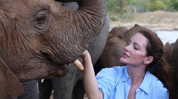 Kristin Davis turns love of elephants into 'Holiday in the Wild'