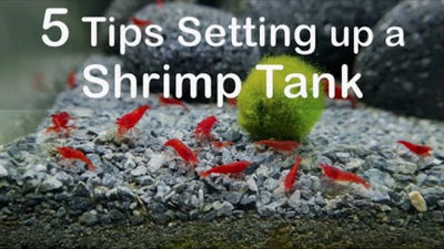 5 Tips on setting up a shrimp tank