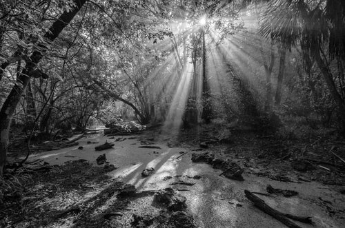 Ancient Light I B&W HD Acrylics and Metallic Prints