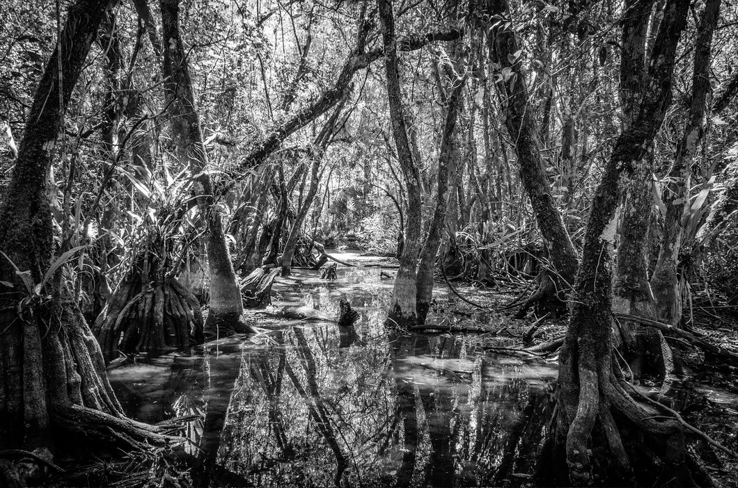 Ceremony Of Shadows-Cottonmouth Pond Canvas