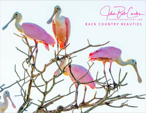 Back Country Beauties Calendar