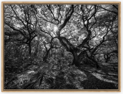 Hidden Refuge BW Canvas