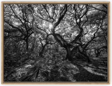 Load image into Gallery viewer, Hidden Refuge BW Canvas