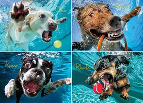 1000 Piece Jigsaw Puzzle - Adult , Couples, Children and Family Puzzles - Underwater Dogs Photo Series Pool Pawty, By Seth Casteel