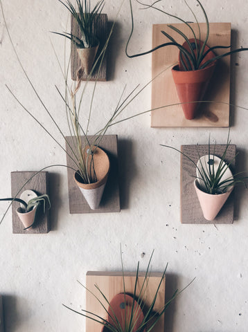 Ceramic and Wood Wall Planter with Air Plant