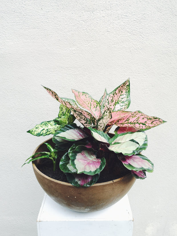 GIFT-READY - PLANT COMBO 1