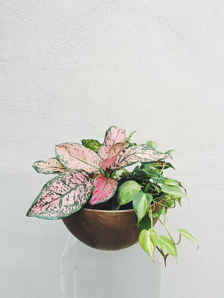 Potted Arrangement (Pink & Green)