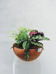 Potted Arrangement (MRR Trio)