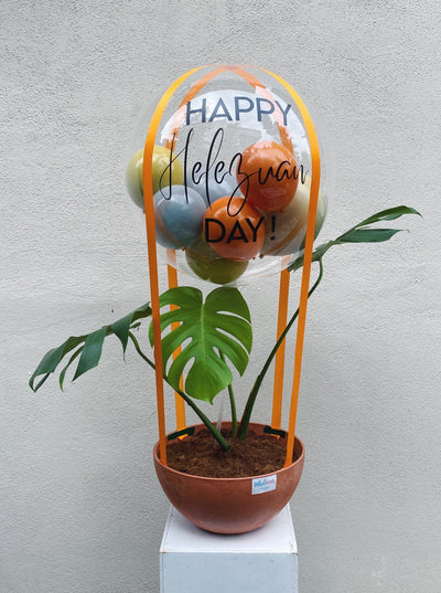Hot Air Balloon Plant - Monstera