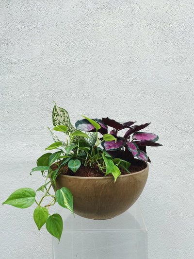 Potted Arrangement (Purple & Green)