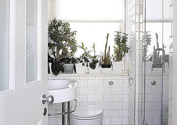 white bathroom windowsill featuring a potted cacti and bonsai trees... Bathroom Style Trends: Bathroom Plant Ideas from Bathroom Bliss by Rotator Rod