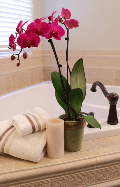 bath tub edge featuring beautiful pink orchids... Bathroom Style Trends: Bathroom Plant Ideas from Bathroom Bliss by Rotator Rod