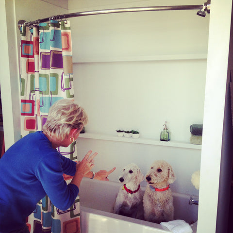 A Pet-Friendly Bath for the Rotator Rod Office Puppies!