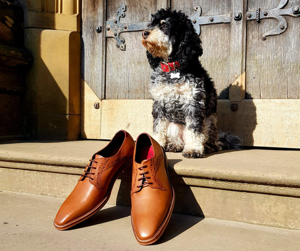 Cockapoo puppy with style Ribble men's leather derby at Gawthorpe Hall, Padiham, Lancashire