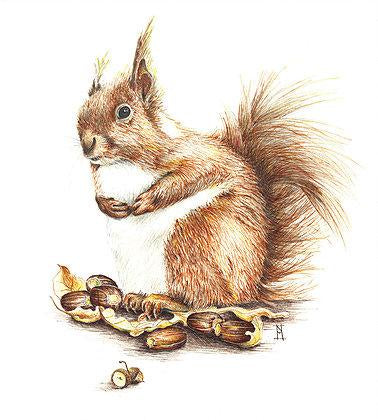 Red Squirrel 'Gingernuts' - A3