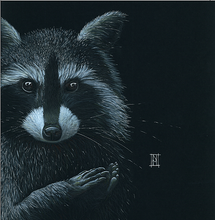 Load image into Gallery viewer, Raccoon 'Asleep' - A3