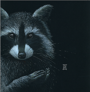 Raccoon 'Asleep' - A3