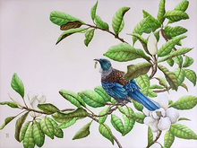 Load image into Gallery viewer, 'Two Trees' Tui - A3