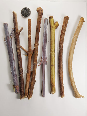 Eucalyptus Chew Branch cuts in various sizes - Canadian Sugar Gliders