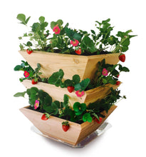 Load image into Gallery viewer, Homegrown Gourmet™ Strawberry Patch Tower