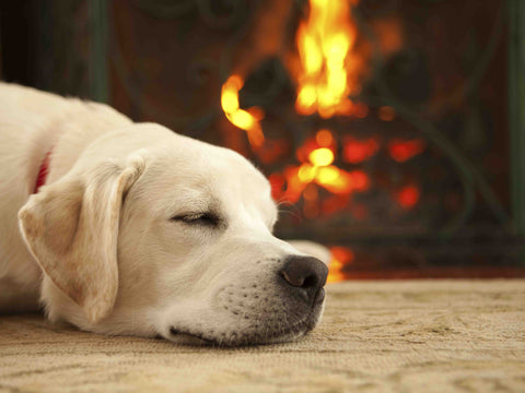 A dog lying on a hearth rug