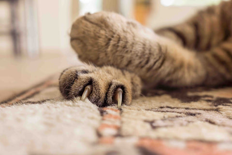 Cat clawing on a rug
