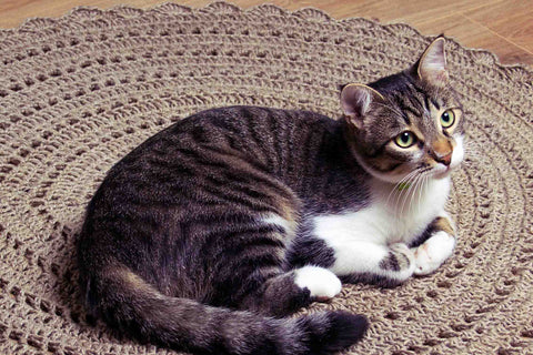 cat lying on the best rug for cat