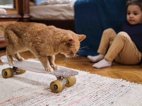 Cat skating on an area rug
