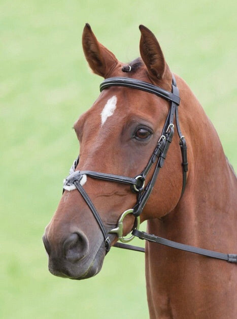 SHIRES SALISBURY BRACKLEY BRIDLE 290